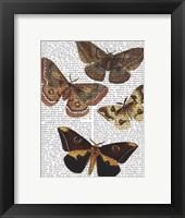 Moth Plate 3 Framed Print