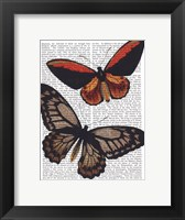 Butterflies 2 Framed Print