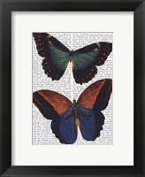 Butterflies 4 Framed Print