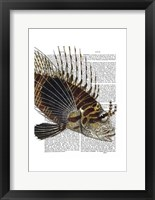 Vintage Spiky Fish Framed Print