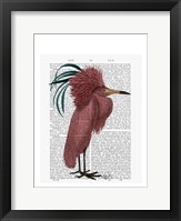 Crested Marsala Bird Framed Print