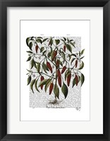 Peppers 3 Framed Print