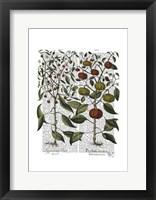 Peppers 4 Framed Print