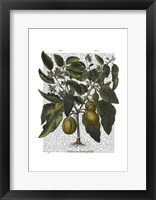 Peppers 6 Framed Print