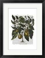 Peppers 6 Framed Print