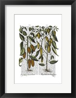 Peppers 7 Framed Print