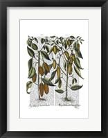 Peppers 7 Framed Print