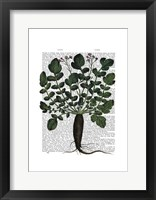 Parsnip 4 Framed Print