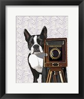 Boston Terrier Photographer Framed Print