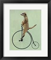 Meerkat on Black Penny Farthing Framed Print