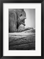 Framed Gorilla Profile I