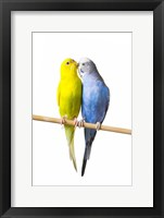 Framed Two Love Birds I