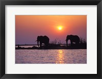 Framed Elephants at Sunset