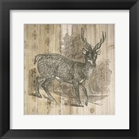 Natural History Lodge III Framed Print
