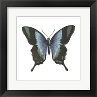 Butterfly Botanical I Framed Print