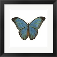 Butterfly Botanical III Framed Print