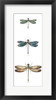 Framed Dragonfly Study I