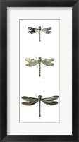 Dragonfly Study II Framed Print