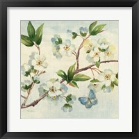 Cherry Bloom II Framed Print