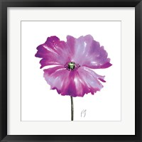 Poppies Tempo III Framed Print
