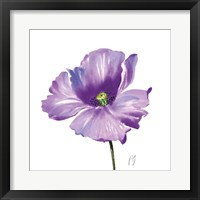 Poppies Tempo IV Framed Print