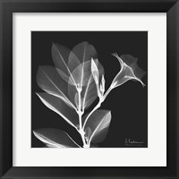 Mandelilla Shadow 1 Framed Print