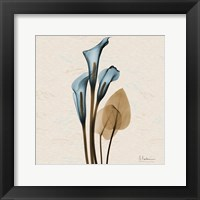 Calla Lily Blue Brown H36 Framed Print