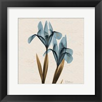 Framed Iris Blue Brown B18