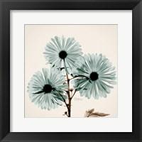 Chrysanthemum Sky Framed Print