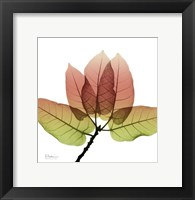 FicusBurkey Fall Framed Print