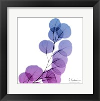 Framed Eucalyptus In Purple