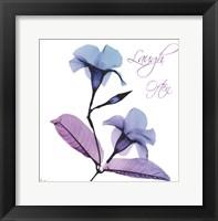 Framed Mandelilla Purple 1