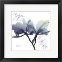 Framed Midnight Orchid 2