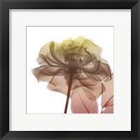 Framed Rose Dawn 3