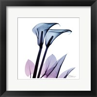 Framed Calla Lily Purp II