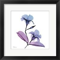 Framed Mandelilla Purple 2