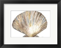 Framed Sea Shell Neutral 2