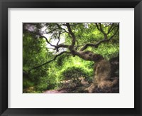 Framed Japanese Tree Painted