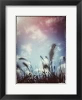 Framed Grass Stalks With Border