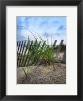 Framed Beach Grass With Fence And Border