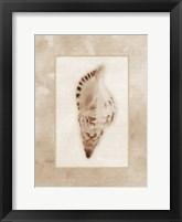 Sepia Shell I Framed Print