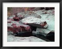 Framed Sierra Nevada Forest