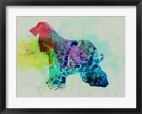 Framed Afghan Hound Watercolor