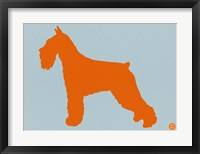 Framed Standard Schnauzer Orange