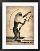 Framed Vintage Monkey