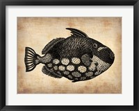Framed Vintage Fish