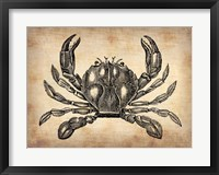 Framed Vintage Crab