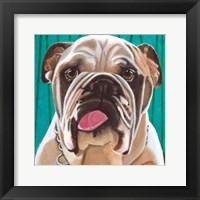 Framed Dlynn's Dogs - Bosco