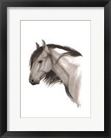 Wild Horse II Framed Print
