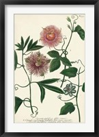 Framed Antique Passion Flower I